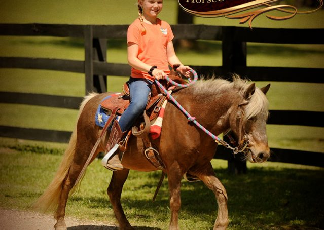 019-Peppermint-Chocolate-Palomino-kids-Pony-Mare-For-Sale