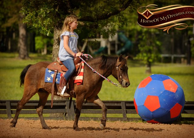 019-Punchy-Bay-Pony-Gelding-For-Sale-Kids-Bombproof