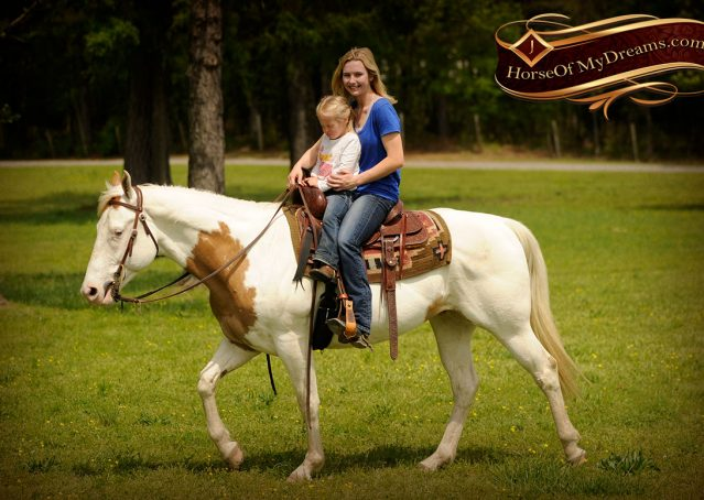 020-Dancer-APHA-Gelding-For-Sale