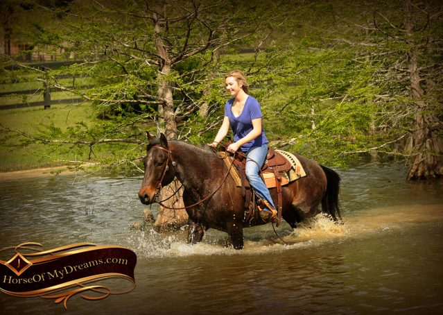 020-Jazz-Bay-Roan-AQHA-Gelding-For-Sale