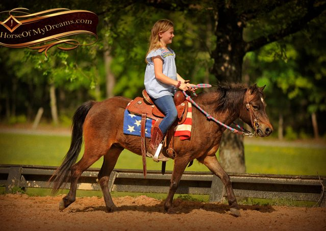 020-Punchy-Bay-Pony-Gelding-For-Sale-Kids-Bombproof