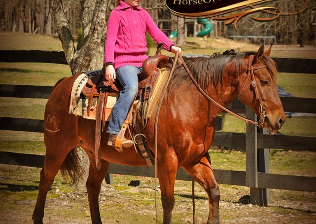 020-Wagner-Bay-AQHA-Gelding-For-Sale