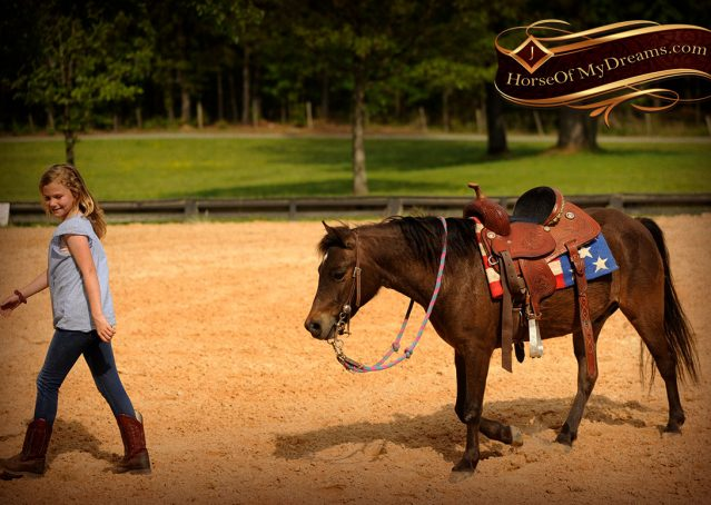 021-Punchy-Bay-Pony-Gelding-For-Sale-Kids-Bombproof