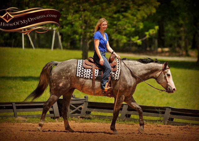 022-Berkley-Gray-Grey-AQHA-Quarter-Horse-Gelding-For-Sale