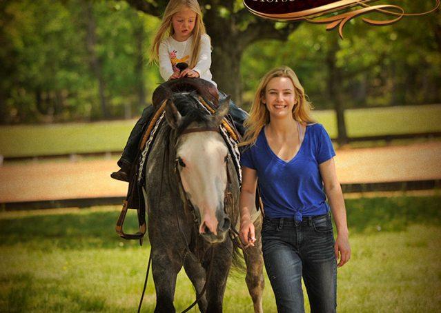 025-Berkley-Gray-Grey-AQHA-Quarter-Horse-Gelding-For-Sale