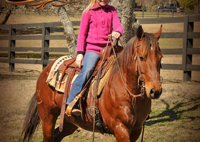 025-Wagner-Bay-AQHA-Gelding-For-Sale
