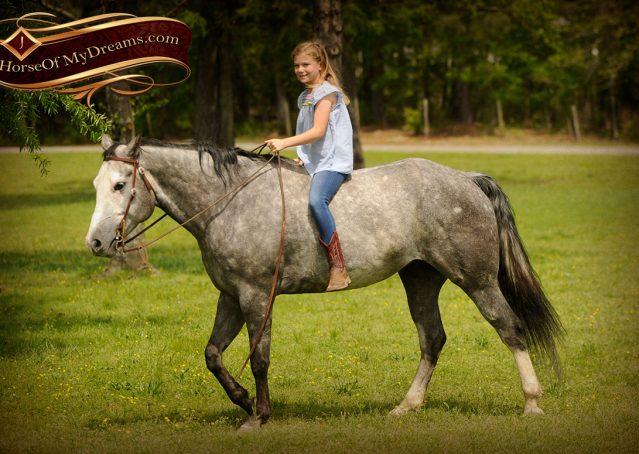 026-Berkley-Gray-Grey-AQHA-Quarter-Horse-Gelding-For-Sale
