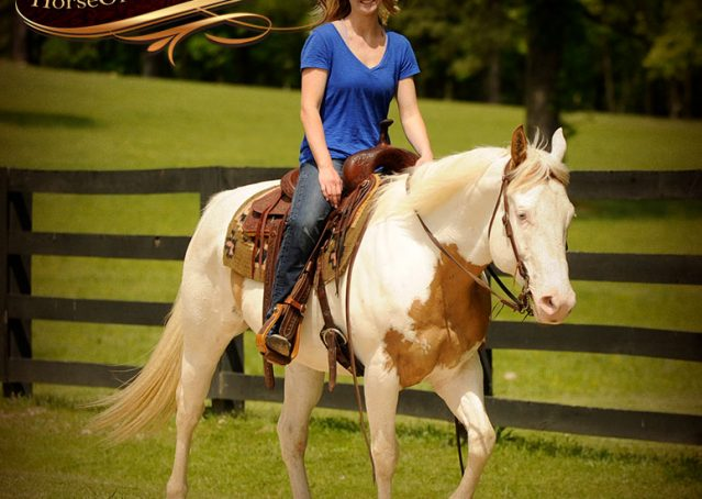 026-Dancer-APHA-Gelding-For-Sale