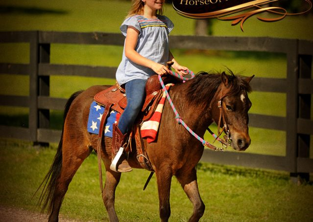 026-Punchy-Bay-Pony-Gelding-For-Sale-Kids-Bombproof