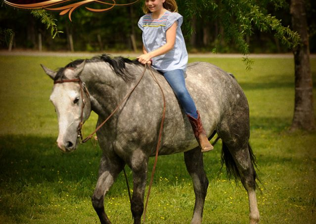 028-Berkley-Gray-Grey-AQHA-Quarter-Horse-Gelding-For-Sale