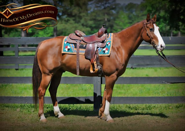 001-Ben-Chestnut-Quarter-Horse-Gelding-For-Sale