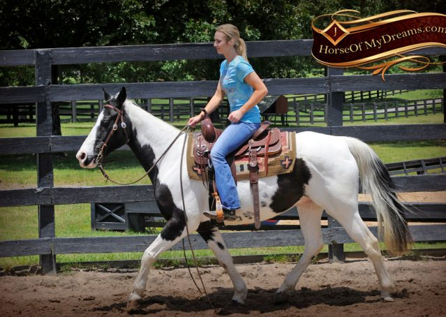 002-Chex-Black-Tobiano-Paint-Horse-Gelding-For-Sale