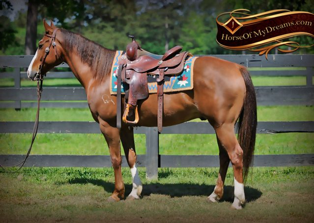 004-Ben-Chestnut-Quarter-Horse-Gelding-For-Sale