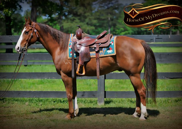 005-Ben-Chestnut-Quarter-Horse-Gelding-For-Sale