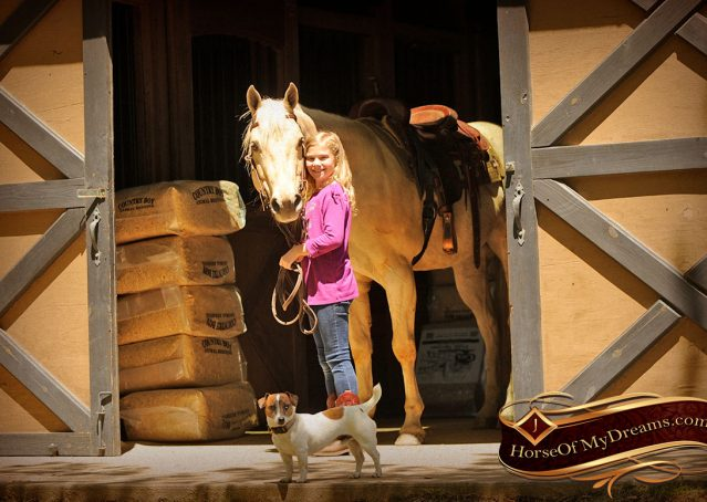 006-Apollo-Palomino-Bombproof-Family-Safe-Quarter-Horse-Gelding-For-Sale