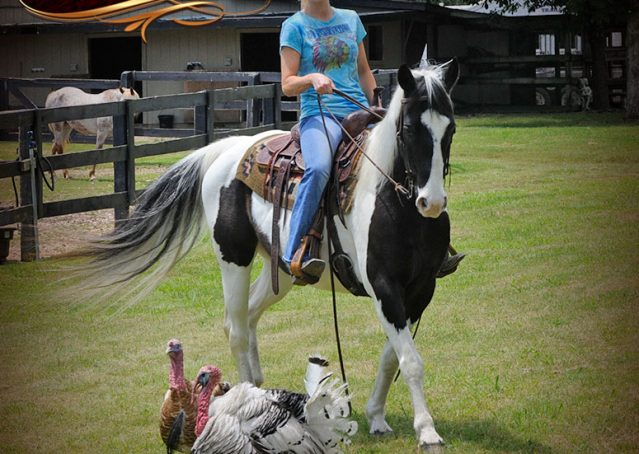 006-Chex-Black-Tobiano-Paint-Horse-Gelding-For-Sale