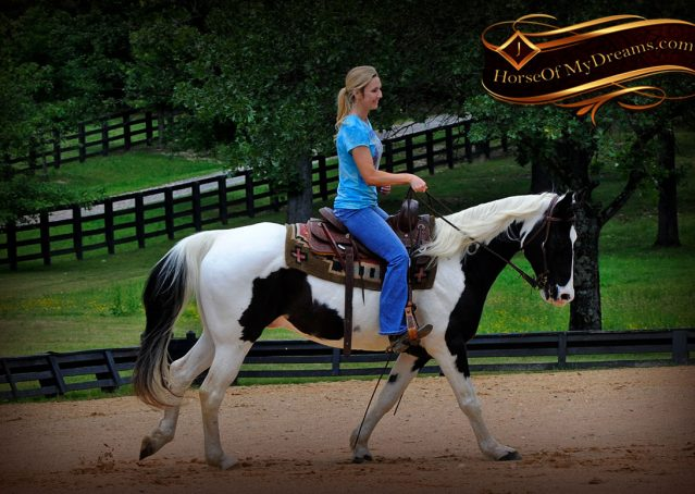 007-Chex-Black-Tobiano-Paint-Horse-Gelding-For-Sale