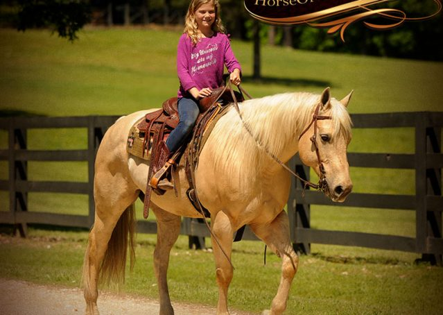 010-Apollo-Palomino-Bombproof-Family-Safe-Quarter-Horse-Gelding-For-Sale