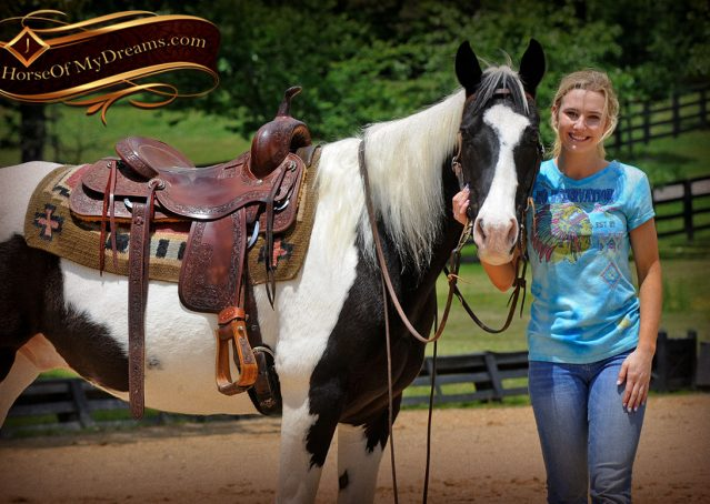 010-Chex-Black-Tobiano-Paint-Horse-Gelding-For-Sale