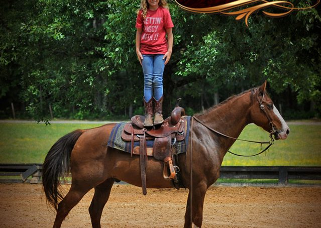 011-Ben-Chestnut-Quarter-Horse-Gelding-For-Sale