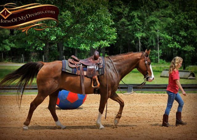 012-Ben-Chestnut-Quarter-Horse-Gelding-For-Sale