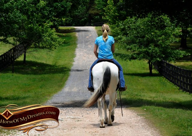 012-Chex-Black-Tobiano-Paint-Horse-Gelding-For-Sale