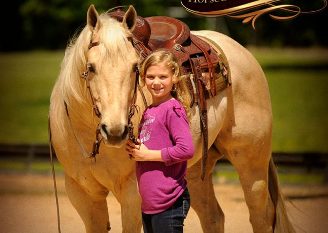 013-Apollo-Palomino-Bombproof-Family-Safe-Quarter-Horse-Gelding-For-Sale