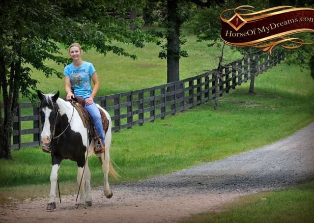 013-Chex-Black-Tobiano-Paint-Horse-Gelding-For-Sale