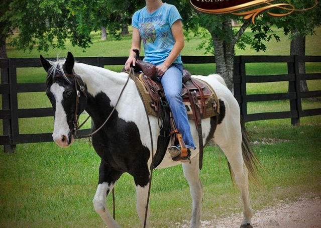 014-Chex-Black-Tobiano-Paint-Horse-Gelding-For-Sale