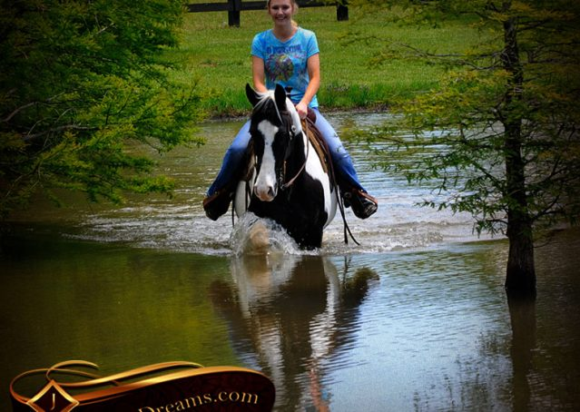 015-Chex-Black-Tobiano-Paint-Horse-Gelding-For-Sale