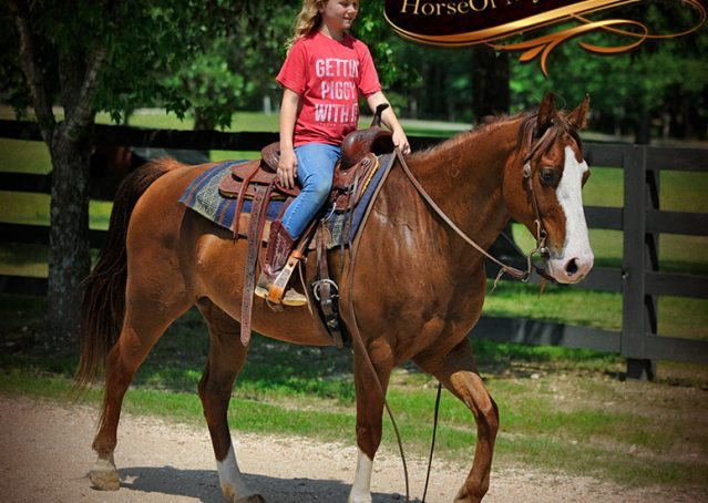 017-Ben-Chestnut-Quarter-Horse-Gelding-For-Sale