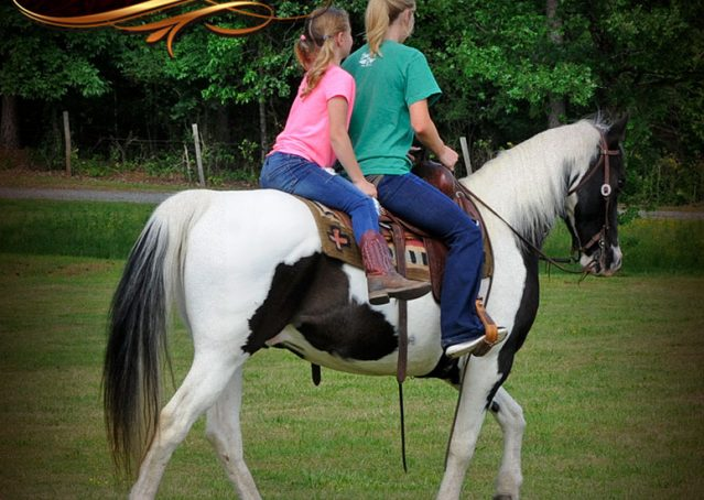 017-Chex-Black-Tobiano-Paint-Horse-Gelding-For-Sale