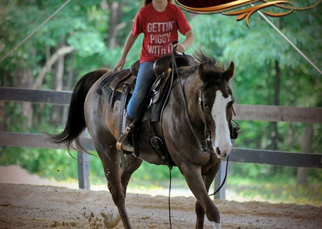 018-Ben-Chestnut-Quarter-Horse-Gelding-For-Sale