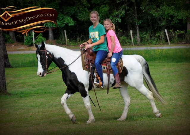 018-Chex-Black-Tobiano-Paint-Horse-Gelding-For-Sale