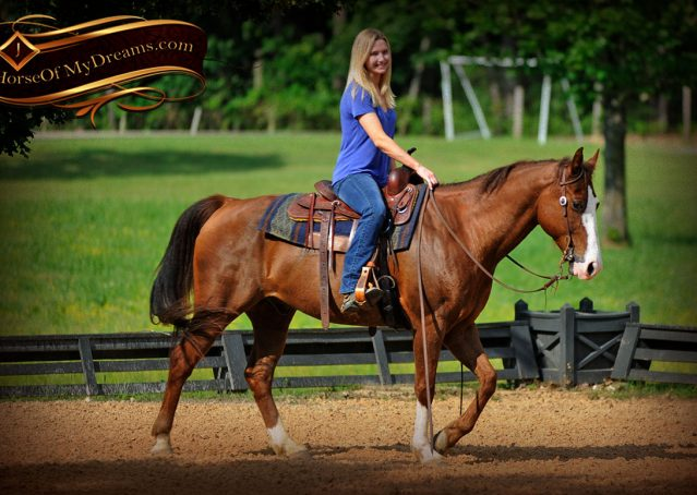 020-Ben-Chestnut-Quarter-Horse-Gelding-For-Sale