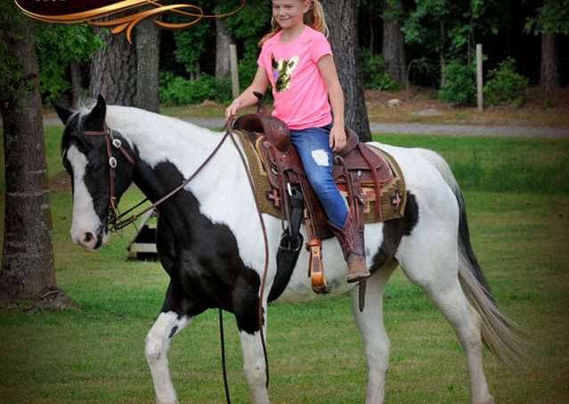 020-Chex-Black-Tobiano-Paint-Horse-Gelding-For-Sale