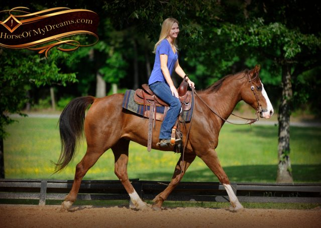 021-Ben-Chestnut-Quarter-Horse-Gelding-For-Sale