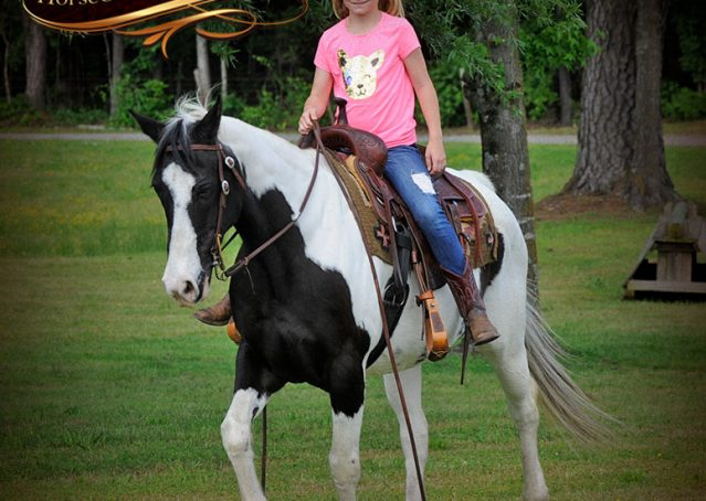 021-Chex-Black-Tobiano-Paint-Horse-Gelding-For-Sale