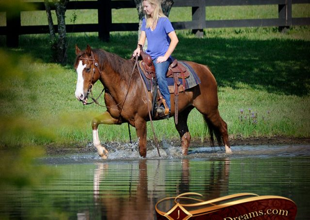 024-Ben-Chestnut-Quarter-Horse-Gelding-For-Sale