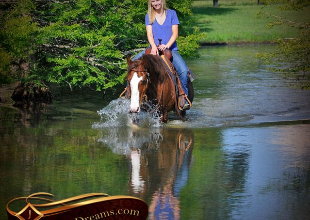 025-Ben-Chestnut-Quarter-Horse-Gelding-For-Sale