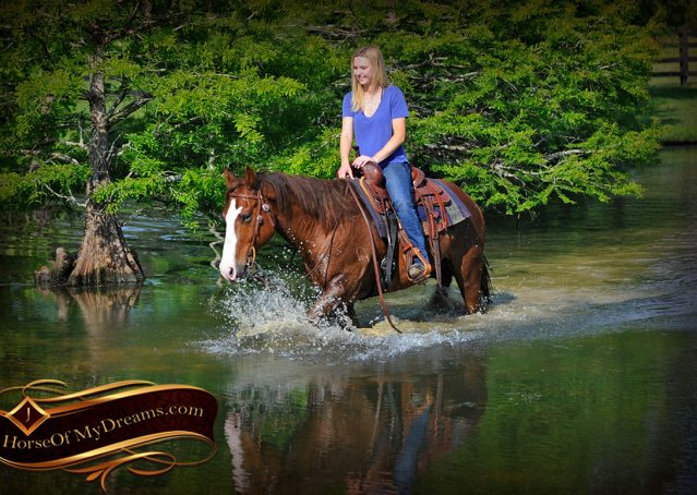 026-Ben-Chestnut-Quarter-Horse-Gelding-For-Sale