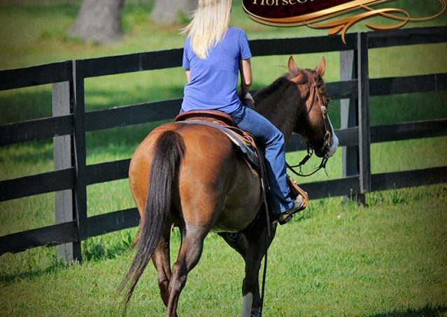 027-Ben-Chestnut-Quarter-Horse-Gelding-For-Sale