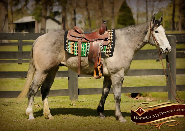 001-Bugsy-Grey-AQHA-Gelding-For-Sale
