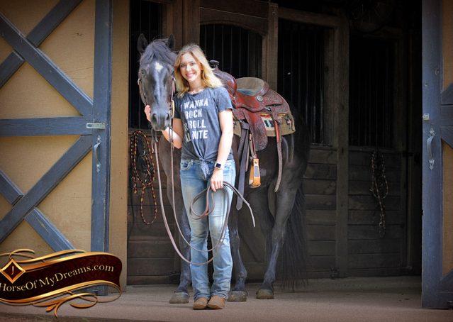 001-Winston-AQHA-Black-Quarter-Horse-gelding-for-sale