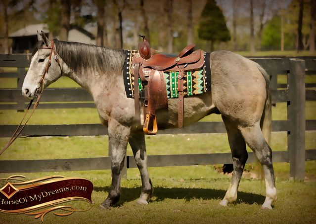 002-Bugsy-Grey-AQHA-Gelding-For-Sale
