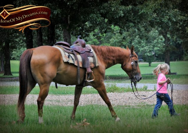 002-Timber-AQHA-Chestnut-Gelding-For-Sale