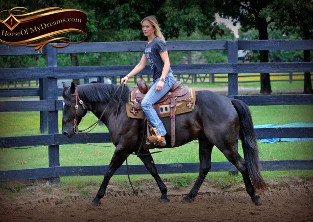 002-Winston-AQHA-Black-Quarter-Horse-gelding-for-sale