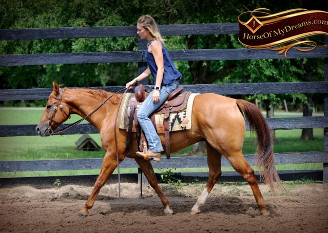 003-Timber-AQHA-Chestnut-Gelding-For-Sale