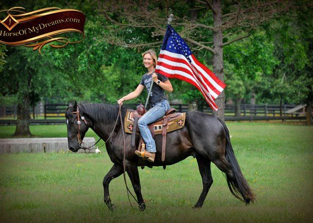 003-Winston-AQHA-Black-Quarter-Horse-gelding-for-sale