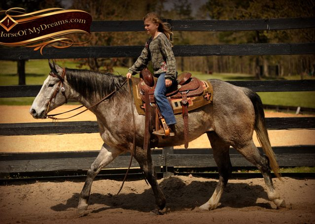004-Bugsy-Grey-AQHA-Gelding-For-Sale